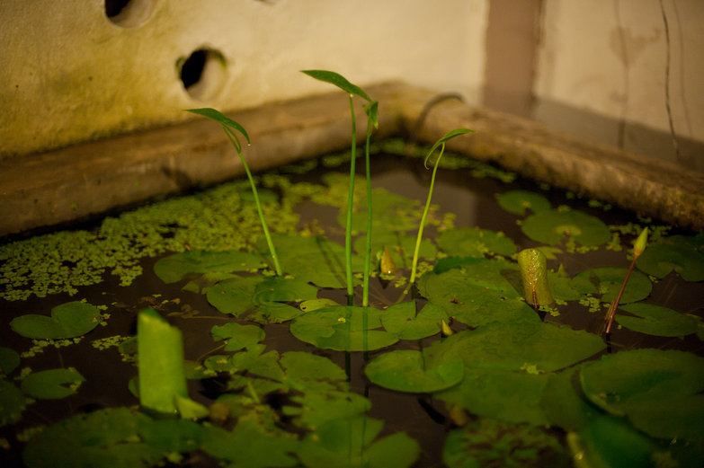 Bann Kun-Pra Guesthouse Waterlillies