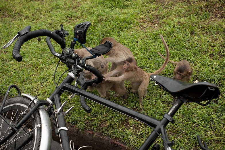 Monkeying Around with Tyler's Bike