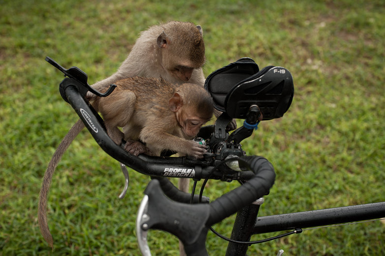 Monkeys and Compass