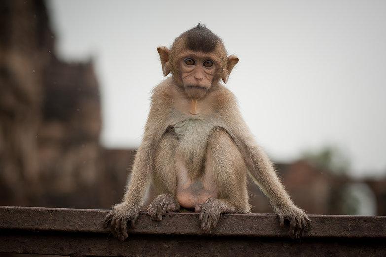 Old Soul Monkey