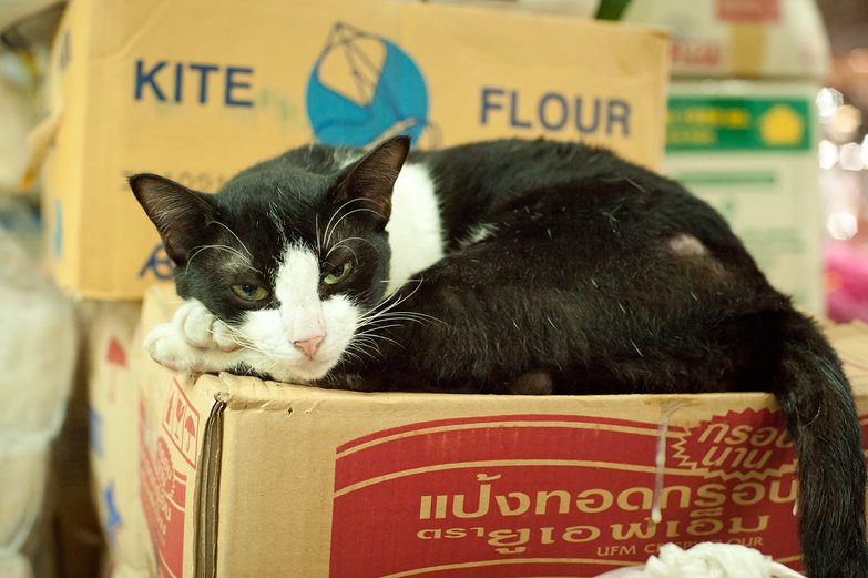 Thai Market Cat Relaxing