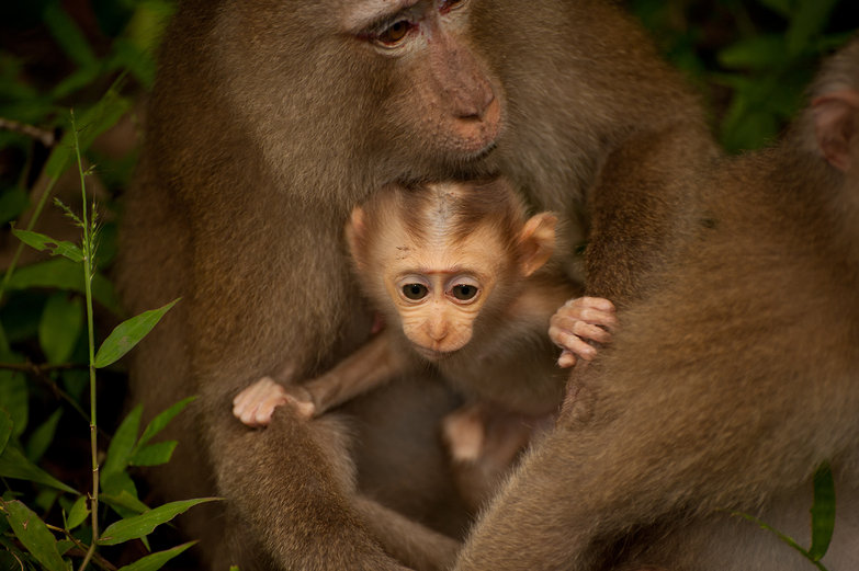 Baby Monkey: &quot;I'm Outta Here!&quot;