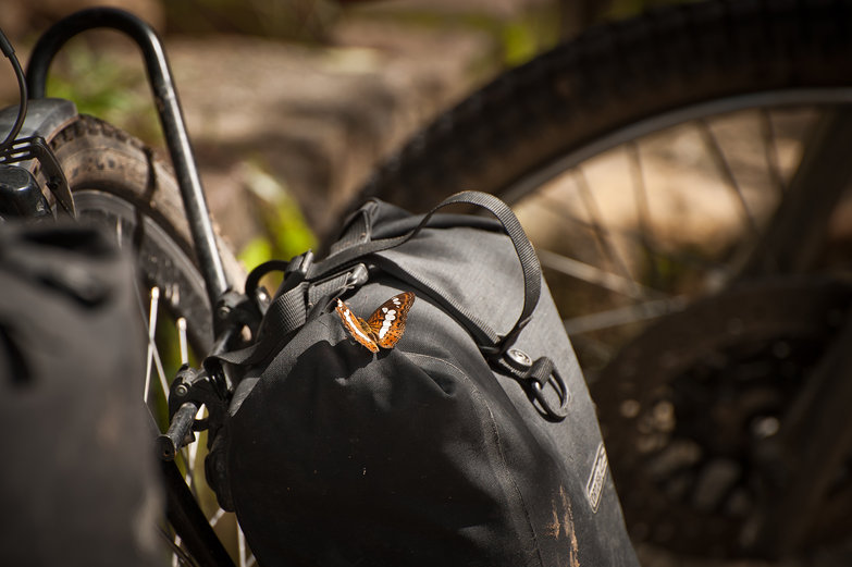 Butterfly on Pannier