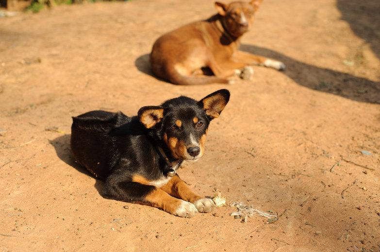 Thai Doggie