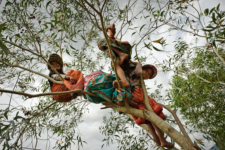 Cambodian Girls Up in a Tree