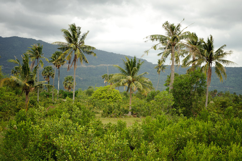 Cambodian Landscape