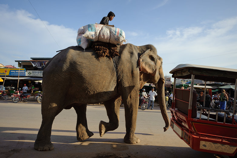 Running Errands w/ an Elephant