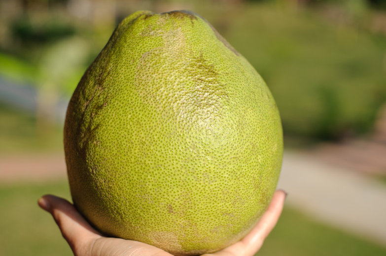 MONSTER POMELO