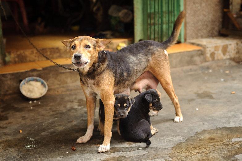 Mama Dog & Puppies