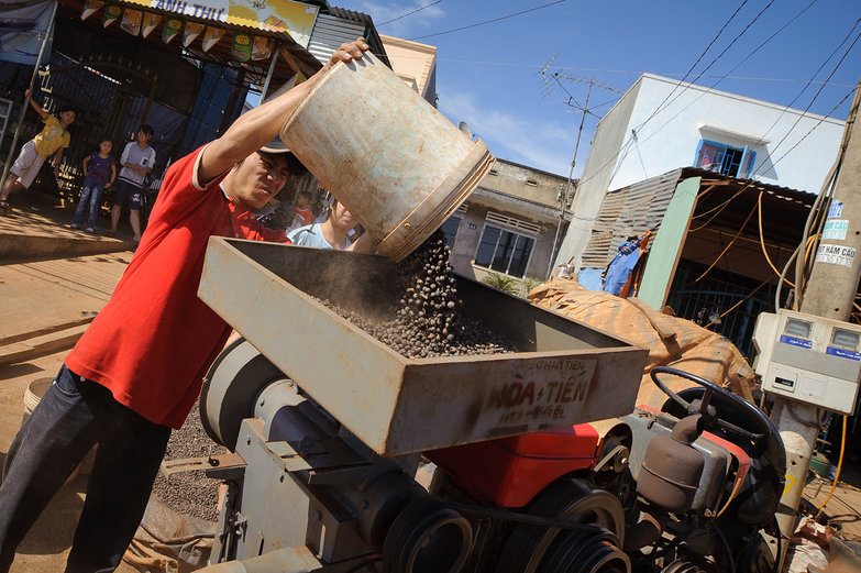 Processing Dry Coffee Berries