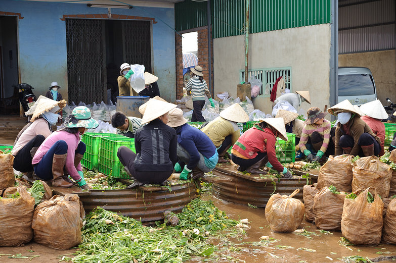 Vietnamese Women Washing Greens