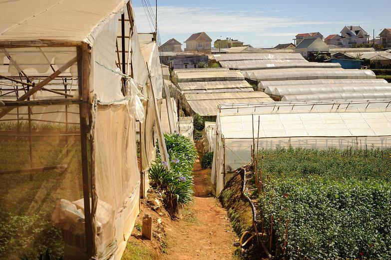 Greenhouses Around Da Lat