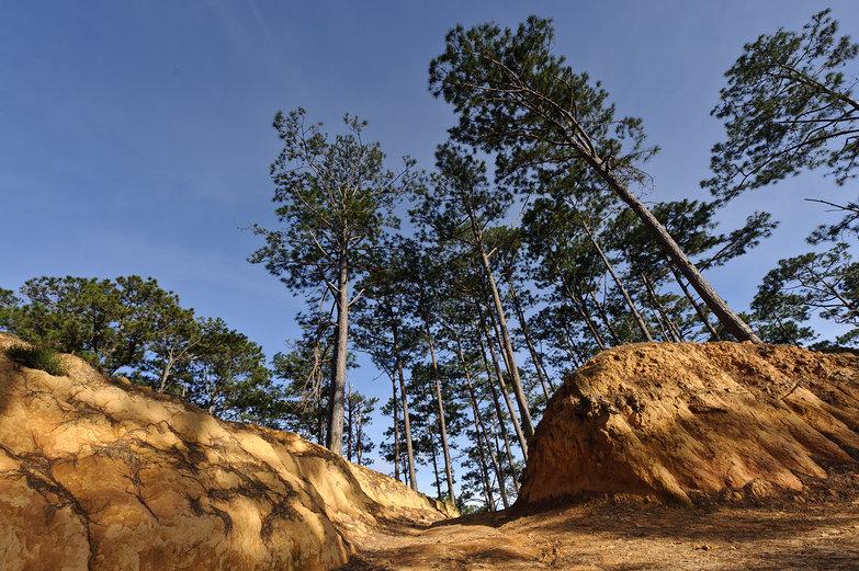 Vietnamese Mountain View