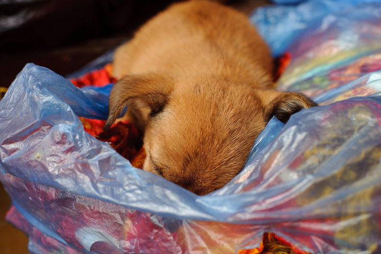 Puppy on a Bag of Silk Scraps from Lantern Making