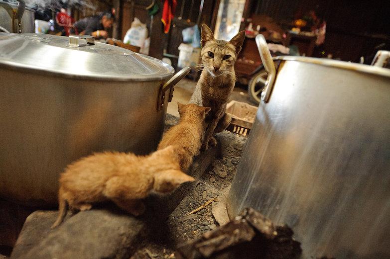 Kitties Keeping Warm in the Kitchen