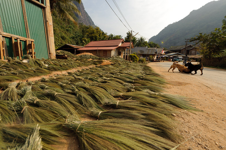 Grass for Broom-Making