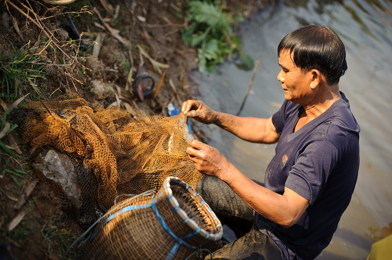 Lao Man Removing Fish From Net