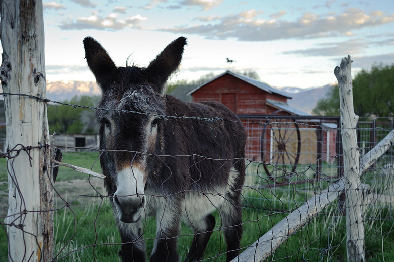Good Morning, Donkey