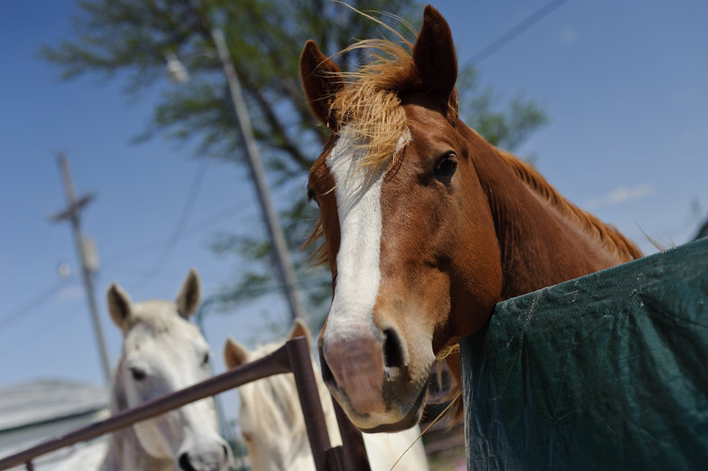 Kansas Horses