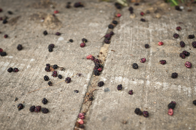 Mulberries on the Sidewalk