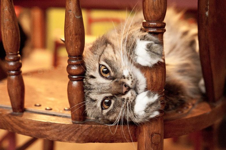 Kitten Staring
