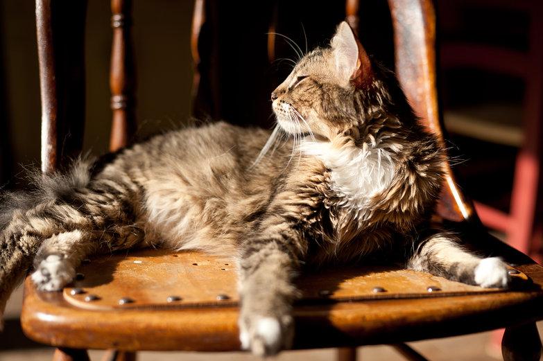 Kitten Chilling