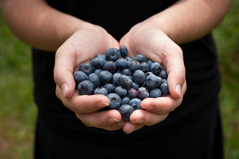 Freshly-Picked Blueberries