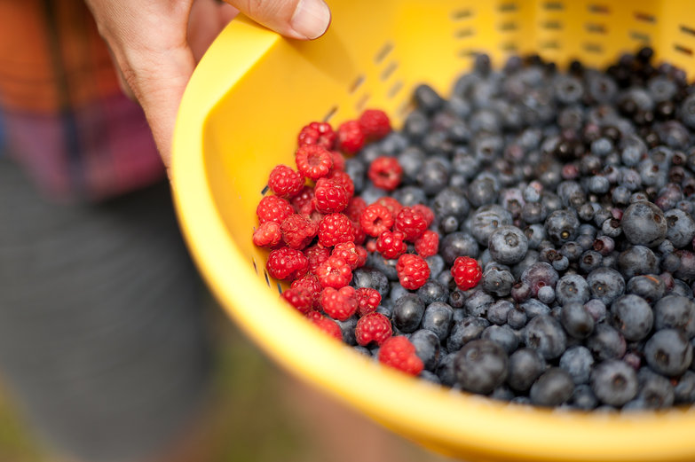 Picking Raspberries & Blueberries