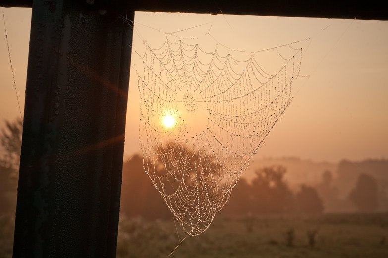 Red Sunrise & Spiderweb