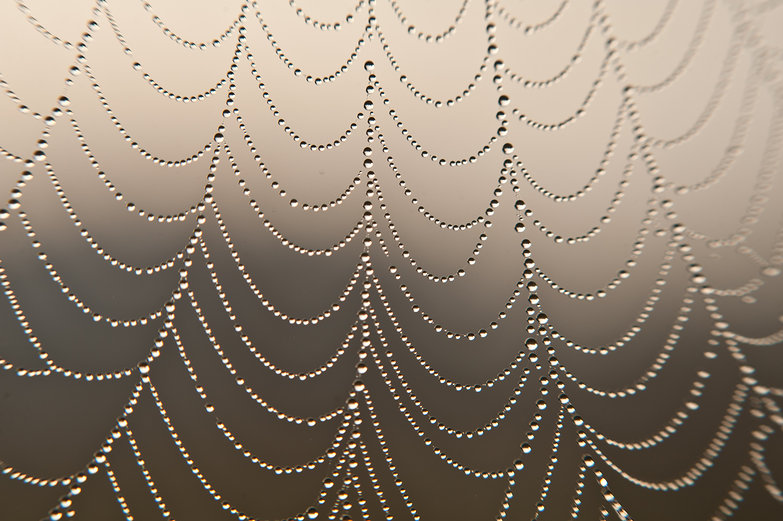 Dewy Morning Spiderweb Pearl Necklace