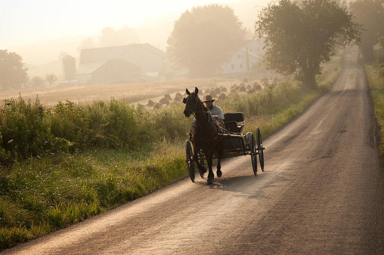 Buggy Morning in Ohio Amish Country