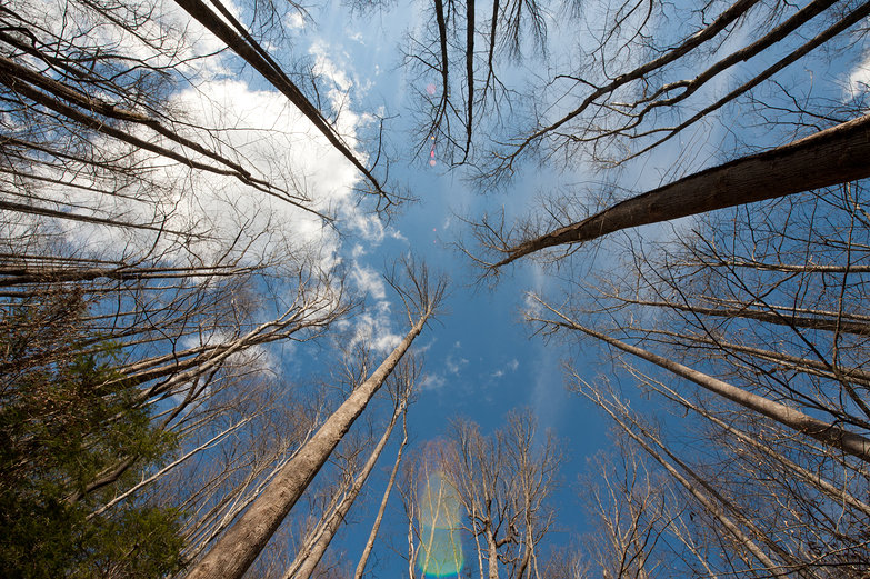 Trees & Sky View