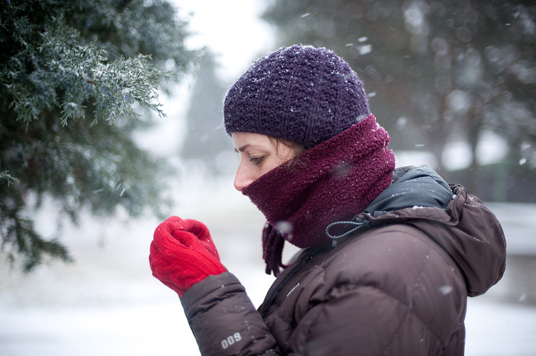 Tara Inspecting a Juniper Berry