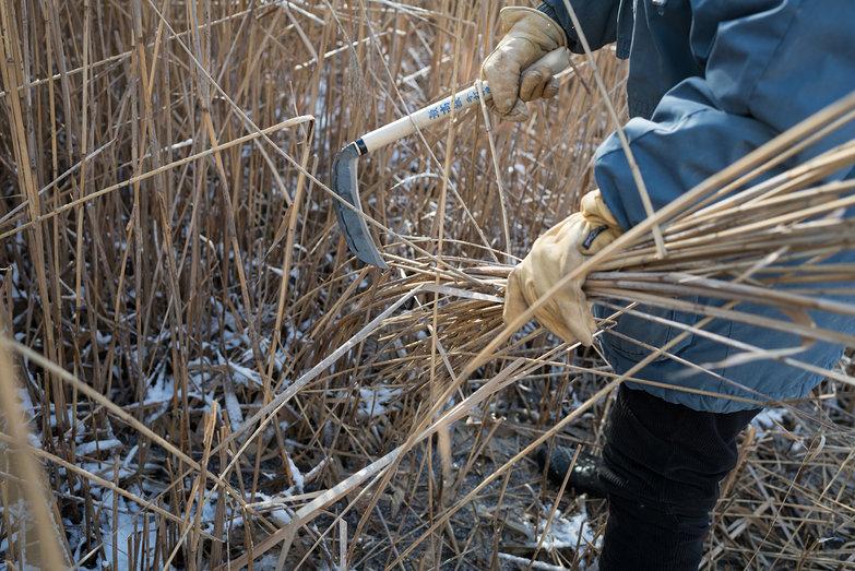 Deanne Cutting Reeds