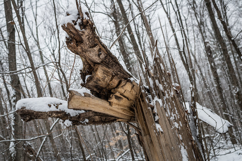 Downed Tree on our Land (in the Snow)