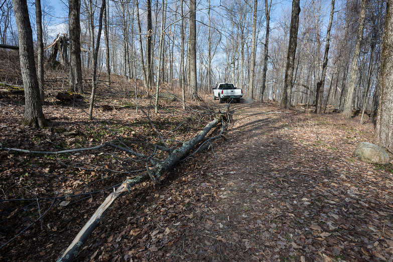 Tara Towing Tree with our Truck