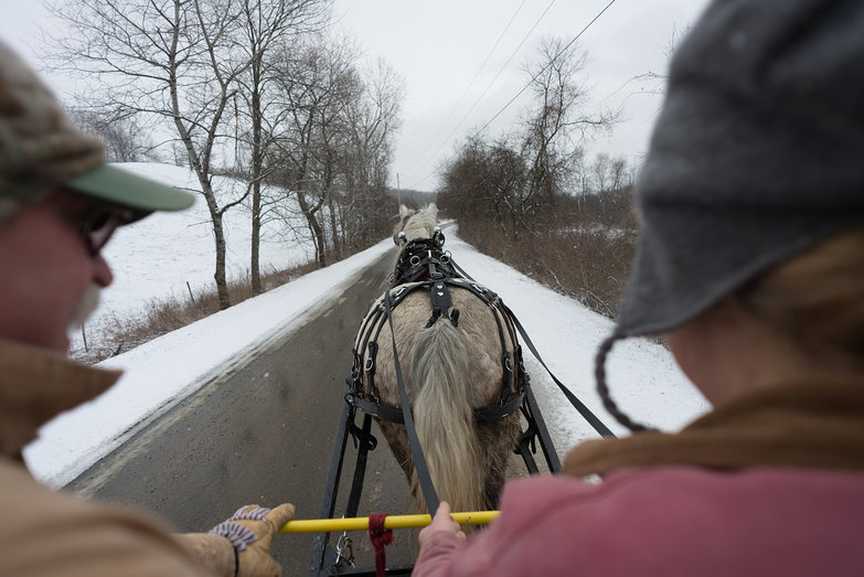 Mark & Patty Driving Horse Cart