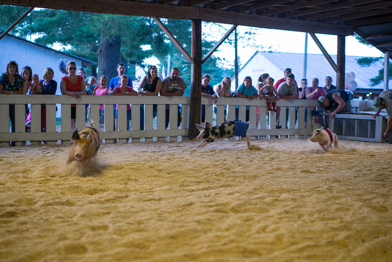 Ossipee Valley Fair Pig Calling Competition