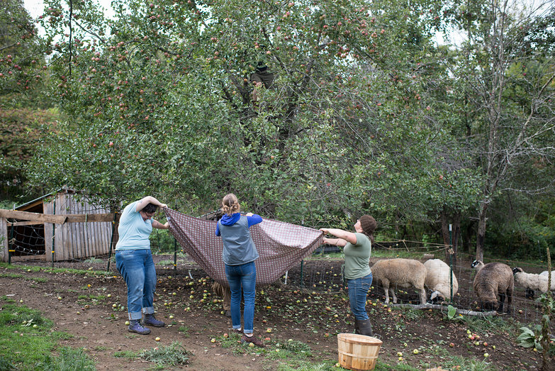 Amanda, Joanna & Jenna Catching Apples (Tyler in Tree)