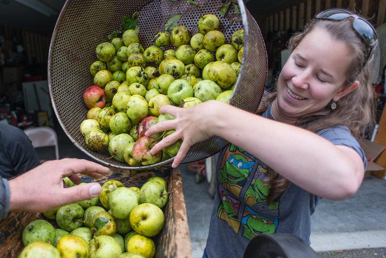 Chrissy Loading Apples into Cider Mill Hopper