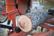 Cutting Maple Timber w/ Wood Mizer