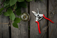 Bottle & Pruners, Making Birch Wintergreen Extract